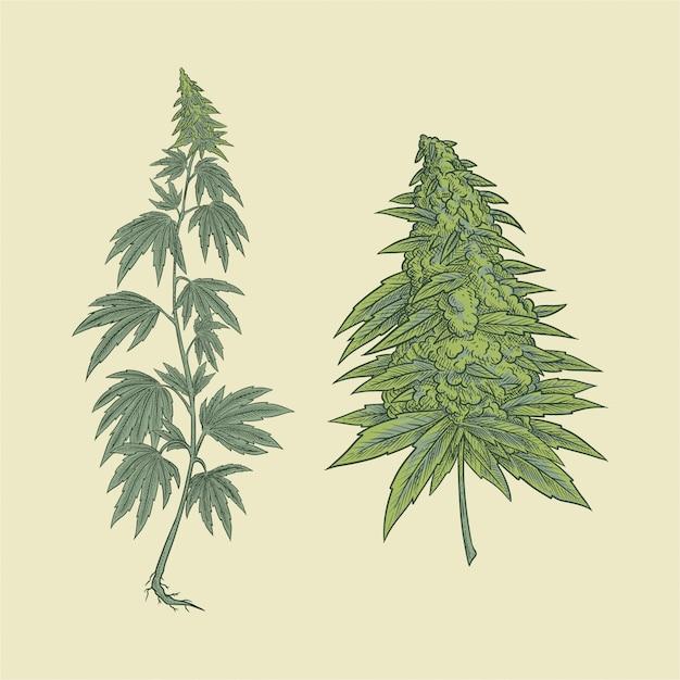 大麻植物と花 Premiumベクター