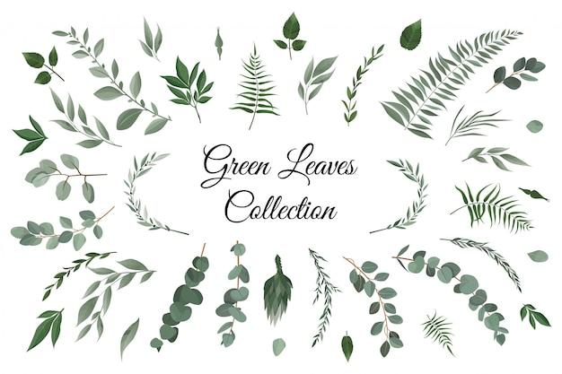 要素セットの緑の葉のコレクション Premiumベクター