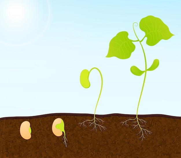 緑の植物の苗 Premiumベクター