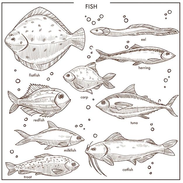 魚スケッチ種分離ベクトルアイコンを設定します。 Premiumベクター