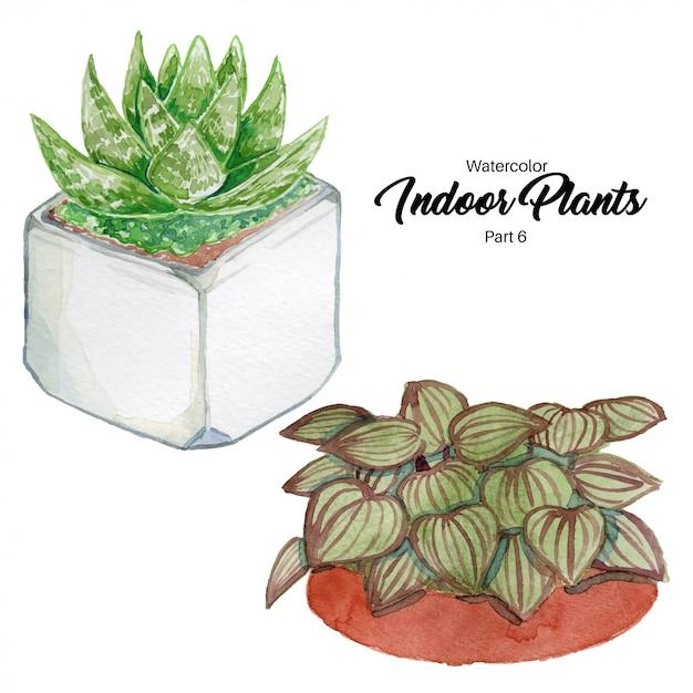 水彩屋内植物 Premiumベクター