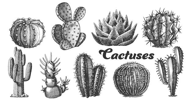 Пустынные растения кактус иллюстрации. Premium векторы