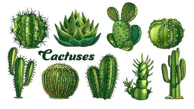 Цвет пустынных растений кактус иллюстрации. Premium векторы