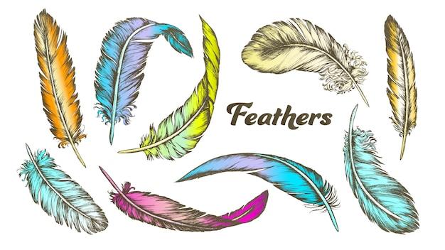 Цвет разных перьев Premium векторы