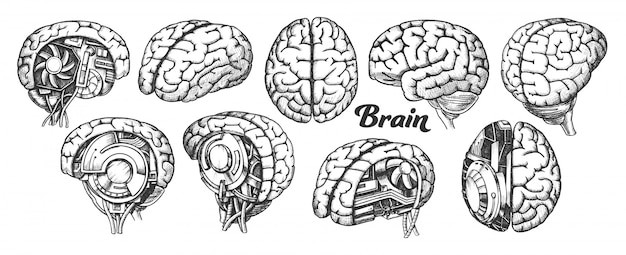 脳 Premiumベクター