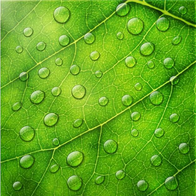 緑の葉のマクロの背景に水滴 Premiumベクター