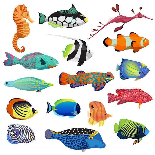 熱帯魚セット Premiumベクター
