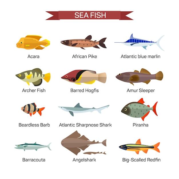 Рыба вектор в плоский дизайн. коллекция морских, морских и речных рыб. изолированный Premium векторы