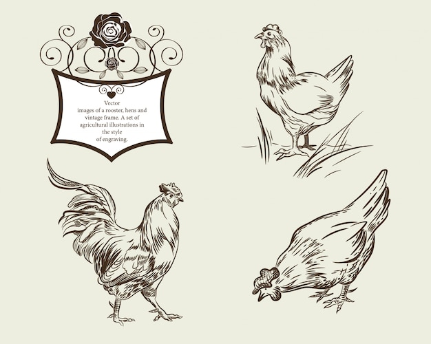 酉鶏とビンテージフレームのベクトル画像 Premiumベクター