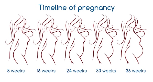 Хронология беременности Premium векторы