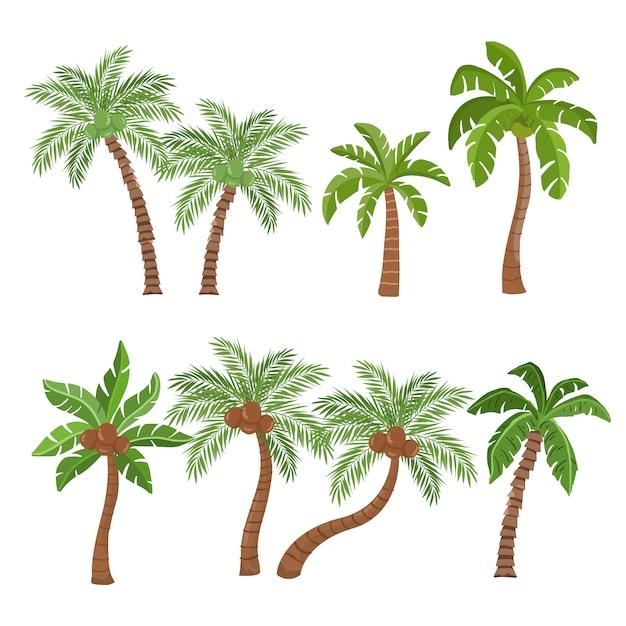 白い背景で隔離のヤシとココナッツの木 Premiumベクター
