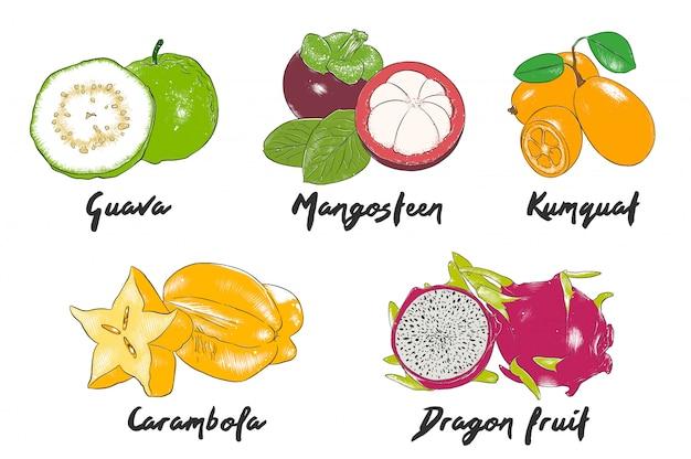手描きのエキゾチックなフルーツのカラフルなスケッチ Premiumベクター