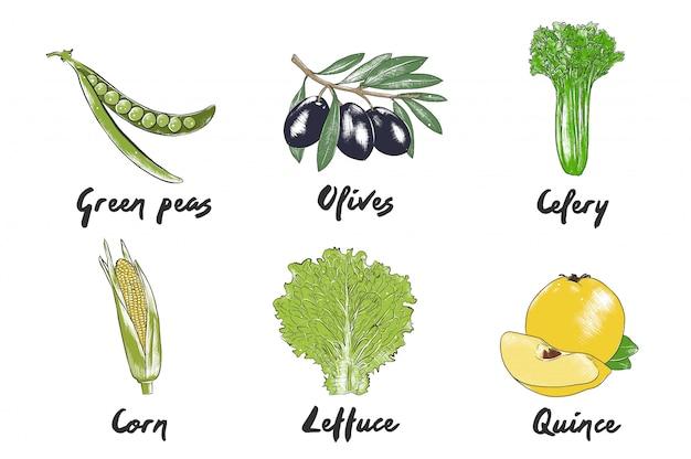 手描きのカラフルな野菜のスケッチ Premiumベクター