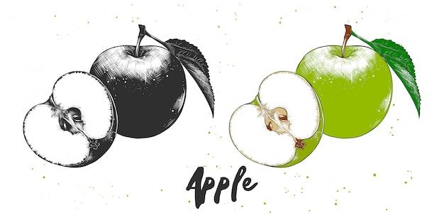 Ручной обращается эскиз яблока Premium векторы