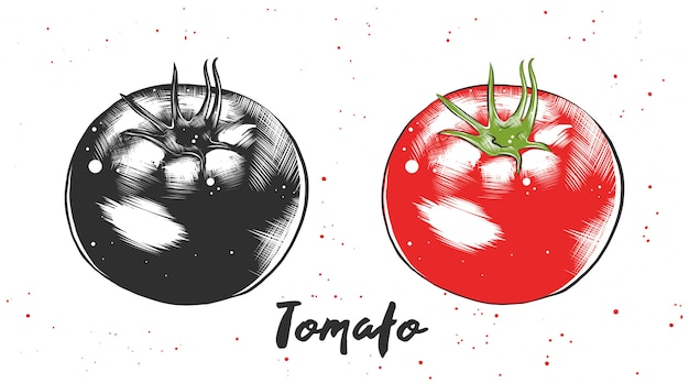 トマトの手描きのスケッチ Premiumベクター
