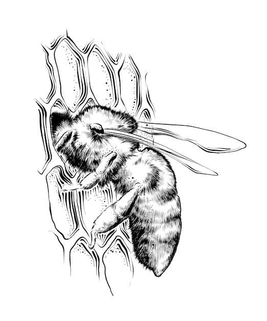 ハニカム蜂の手描きのスケッチ Premiumベクター