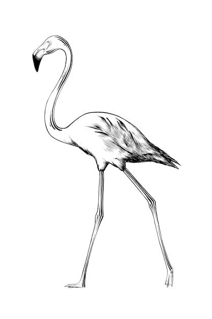 黒のフラミンゴの鳥の手描きのスケッチ Premiumベクター
