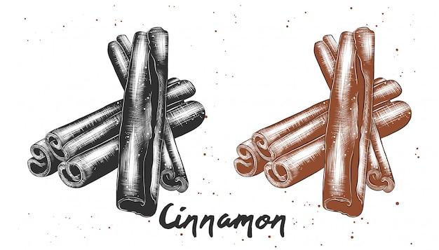 シナモンの手描きのスケッチ Premiumベクター