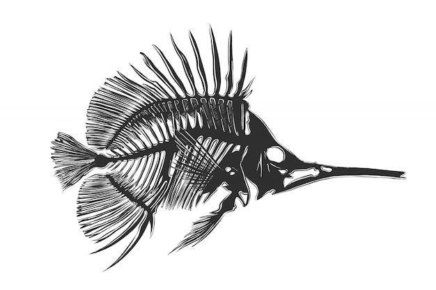 モノクロの魚骨の手描きのスケッチ Premiumベクター