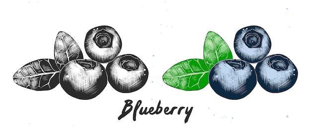 ブルーベリーの手描きのスケッチ Premiumベクター