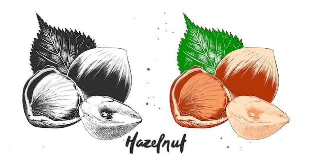 ヘーゼルナッツの手描きのエッチングスケッチ Premiumベクター