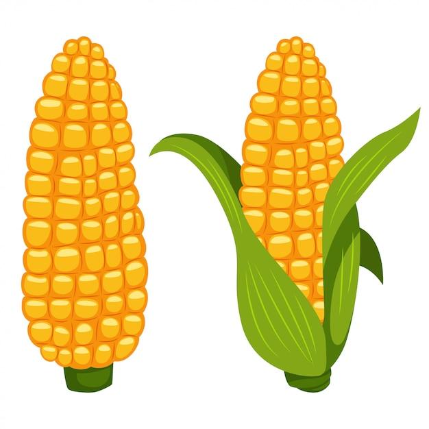 Кукурузные початки векторный мультфильм плоский овощной значок, изолированных на белом фоне. Premium векторы