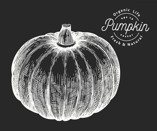 かぼちゃのイラスト。チョークボードに手描きベクトル野菜イラスト。刻まれたスタイル Premiumベクター