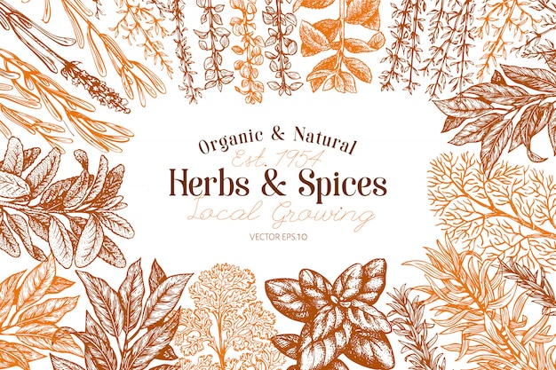 料理用のハーブやスパイス手描きのレトロな植物図。 Premiumベクター