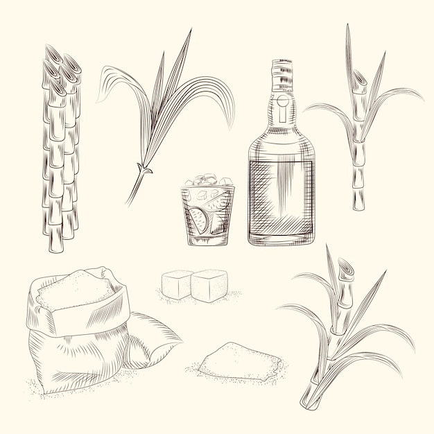 Набор сахарного тростника Premium векторы
