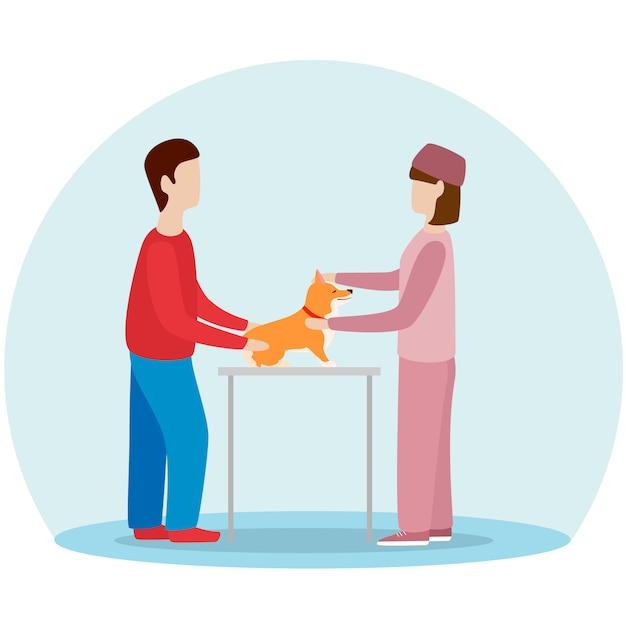 雌獣医子犬犬。ウェールズコーギー予防接種、診療所の検討。 Premiumベクター