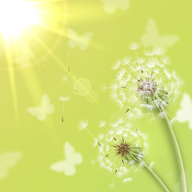 Белые одуванчики с фоном летнего солнца Бесплатные векторы