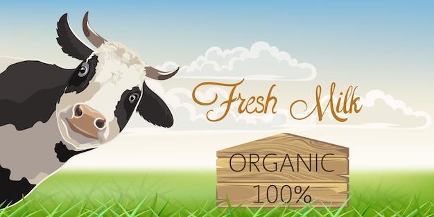 백그라운드에서 풀밭과 검은 반점이있는 암소. 유기농 신선한 우유. 무료 벡터