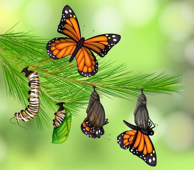 Набор жизненного цикла бабочки Premium векторы