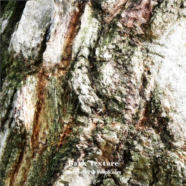how to draw realistic tree bark