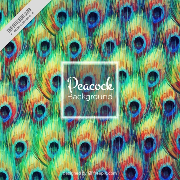 Abstract background of peacock Vector | Free Download