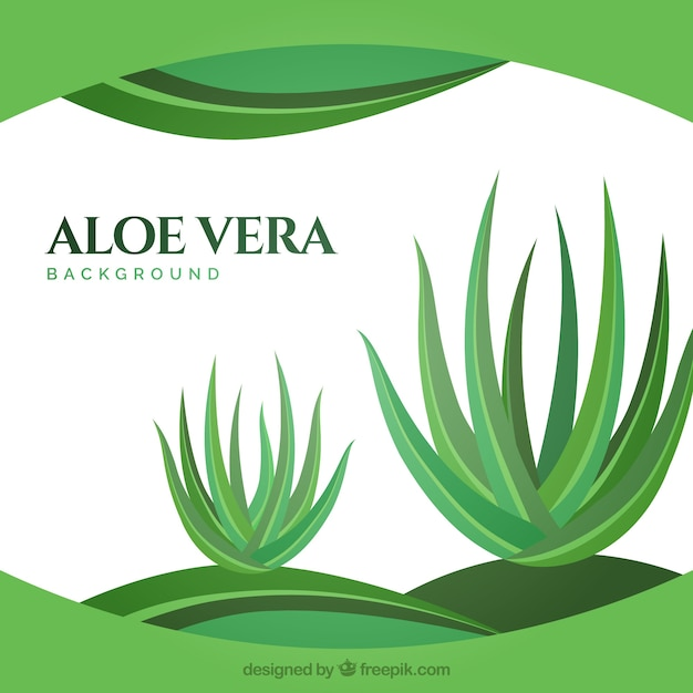 Abstract background with aloe vera\ plants