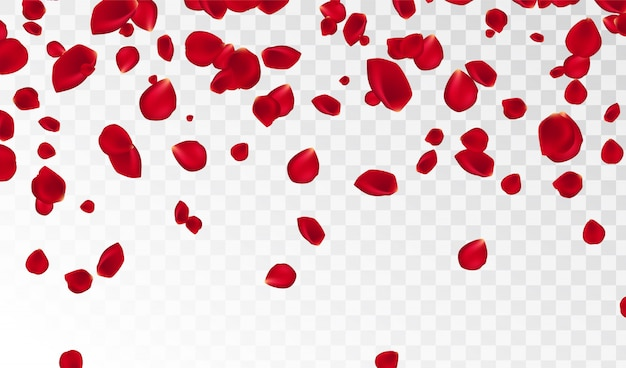 Abstract background with flying red rose petals isolated. vector illustration. rose petals vector illustration. Premium Vector