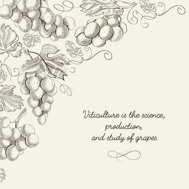 Bacca astratta luce con grappoli d'uva e iscrizione in stile disegnato a mano Vettore gratuito