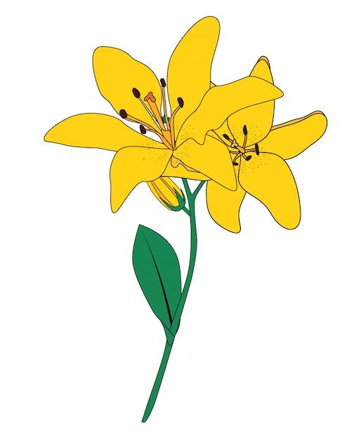 抽象的な手描きのリリーの花。図 Premiumベクター