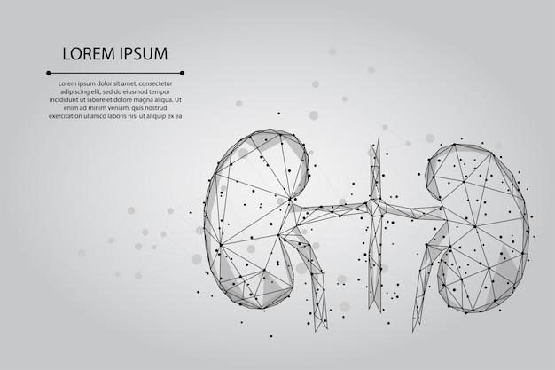 Абстрактная линия месива и точка человеческие почки. урология система медицины лечение низкополигональная иллюстрация Premium векторы