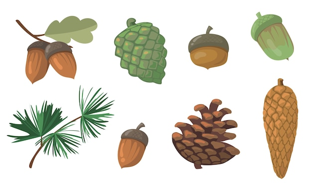 Acorns and pinecones set. pine tree branch, fir tree cone, oak leaf isolated . flat vector illustrations for autumn, fall, nature, forest concept Free Vector
