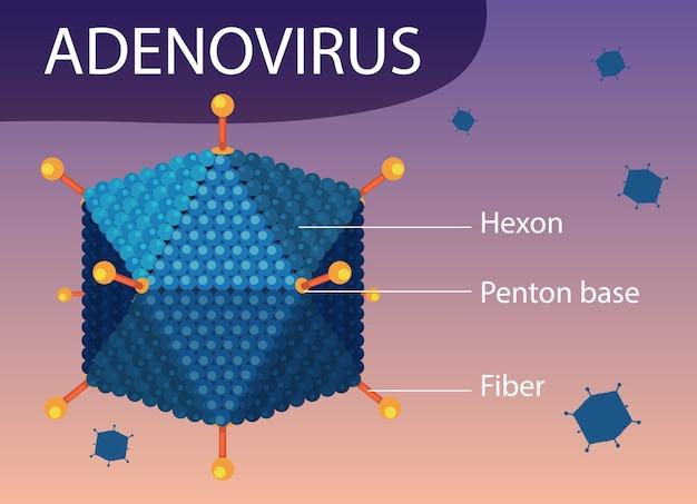 Схема структуры аденовируса на фоне значка вируса Бесплатные векторы
