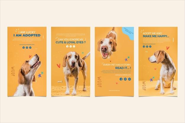 Принять рассказы инстаграм домашних животных Бесплатные векторы