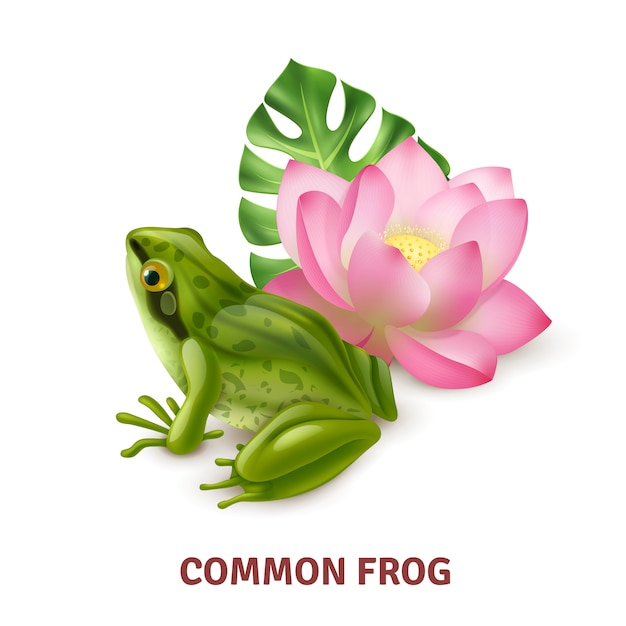 Adult common frog semi aquatic amphibia realistic closeup side view  with water lily Free Vector