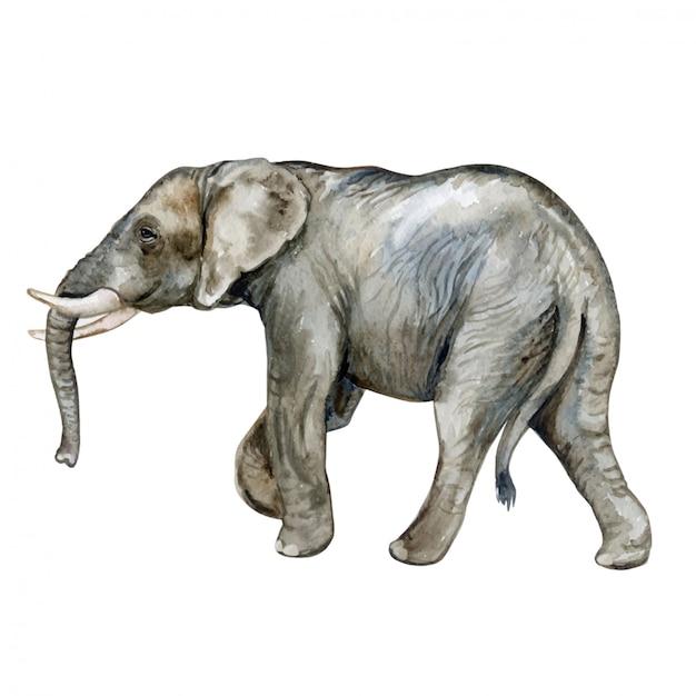 African elephant in watercolor Premium Vector