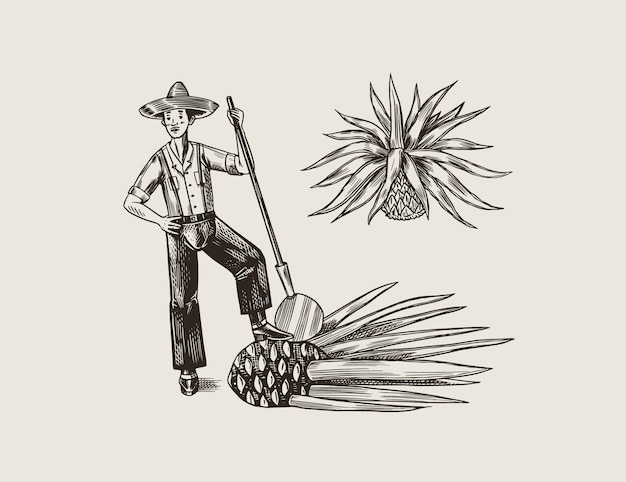 Agave plant for cooking tequila. fruit and farmer and harvest. retro poster or banner. engraved hand drawn vintage sketch. woodcut style.  illustration. Premium Vector