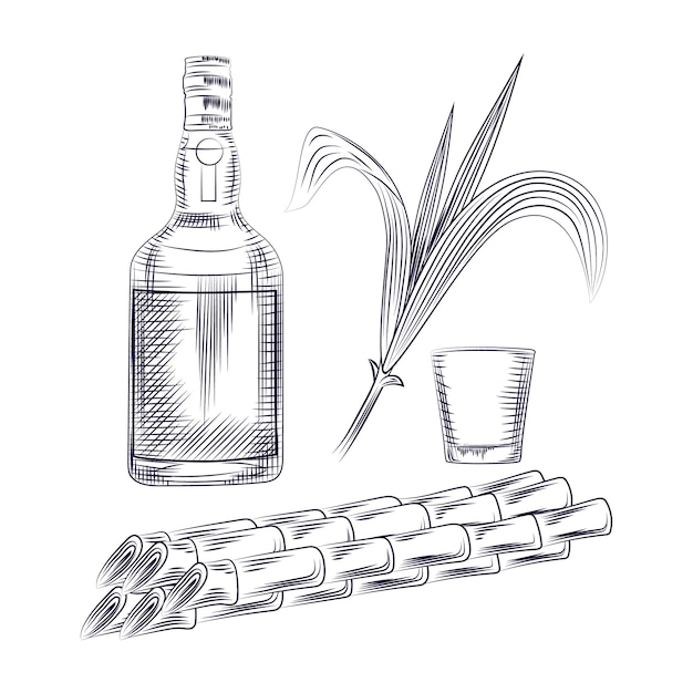 Alcohol drink, sugar plant stalks, bottle rum and cocktail glass. Premium Vector