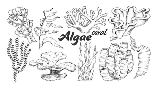 Algae seaweed coral illustration. Premium Vector