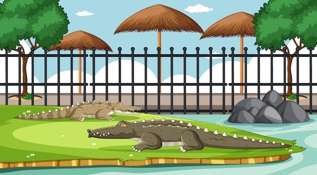 Alligatore nella scena dello zoo Vettore gratuito