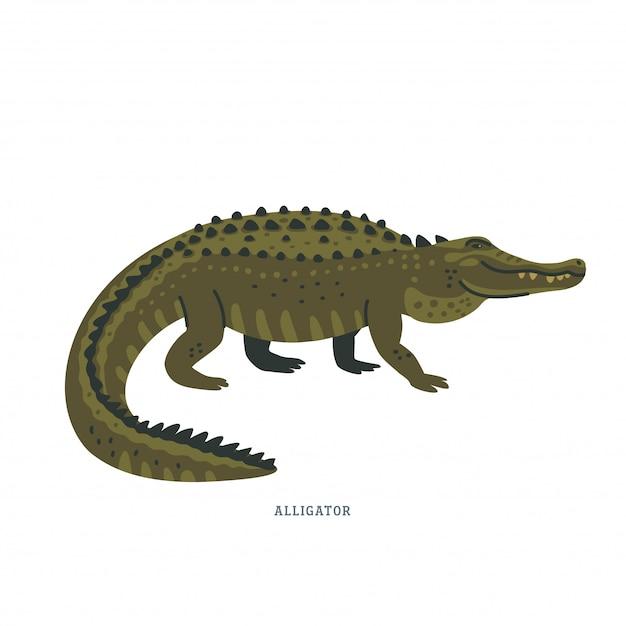 Alligator. Premium Vector